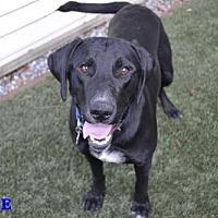 Adopt A Pet :: Opie - Clovis, CA
