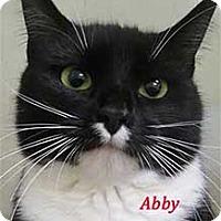 Adopt A Pet :: Abby - Warren, PA