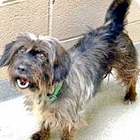 Adopt A Pet :: Nicky - Halifax, NC