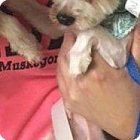 Adopt A Pet :: Larry - Muskegon, MI