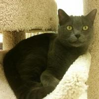 Adopt A Pet :: Pippa (Merritt Island Adoption Center) - Cocoa, FL