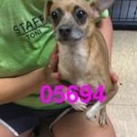 Adopt A Pet :: SISSY - Kiln, MS