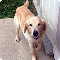 Adopt A Pet :: Ernie - New Canaan, CT