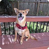 Adopt A Pet :: Ruby - Austin, TX