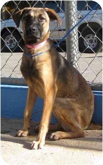 German Shepherd Dog Mix Puppy for adoption in Guaynabo, Puerto Rico - Mara