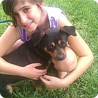 Adopt A Pet :: Buddy - Pembroke pInes, FL