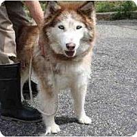 Adopt A Pet :: Sandy - Huntington Station, NY