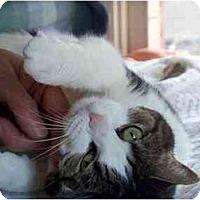 Adopt A Pet :: Michi - Alexandria, VA