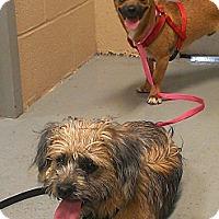Adopt A Pet :: Apollo and Zoe - Berlin, CT