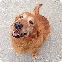 Adopt A Pet :: Bessie - Salem, NH