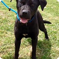 Adopt A Pet :: ONYX - Leland, MS
