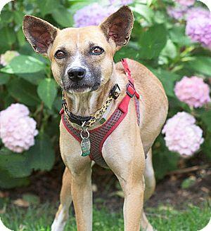 Terrier (Unknown Type, Medium) Mix Dog for adoption in Port Washington, New York - Mabel