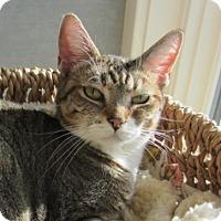 Adopt A Pet :: Annie - Kingston, WA