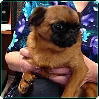 Adopt A Pet :: KIBBLES - ADOPTION PENDING - Seymour, MO