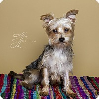 Adopt A Pet :: Axle - Baton Rouge, LA