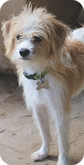 Terrier (Unknown Type, Small) Mix Dog for adoption in Bedminster, New Jersey - Quinn