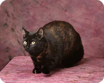 Calico Cat for adoption in Harrisonburg, Virginia - Addy
