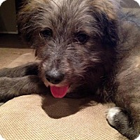 Adopt A Pet :: Pongo - Saskatoon, SK