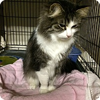 Adopt A Pet :: Guernsey - Byron Center, MI