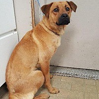 Adopt A Pet :: Artemis - Angola, IN