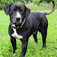 Adopt A Pet :: Pilton - Waldorf, MD