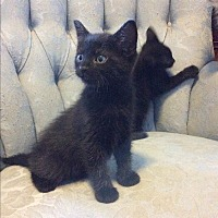 Adopt A Pet :: Harley & Buddy - Modesto, CA
