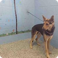 Adopt A Pet :: A504710 - San Bernardino, CA