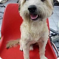 Adopt A Pet :: 'PETE' - Agoura Hills, CA