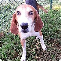 Adopt A Pet :: TROUT - Franklin, TN