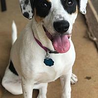 Adopt A Pet :: Quinn - Huntsville, AL