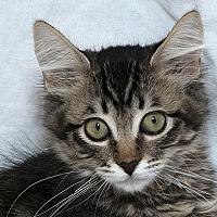 Adopt A Pet :: Maury - Sacramento, CA