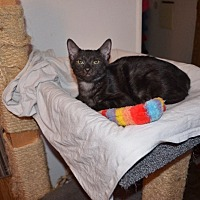 Adopt A Pet :: Stormy - Whittier, CA