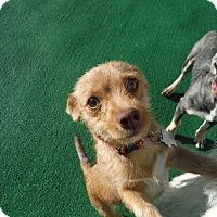 Adopt A Pet :: Hansel @ Petsmart SLO Sat. - Atascadero, CA