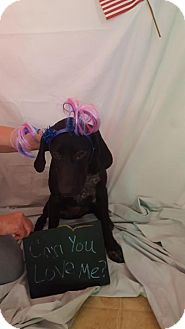 German Shorthaired Pointer Mix Dog for adoption in Lebanon, Maine - Pammie-LOCAL
