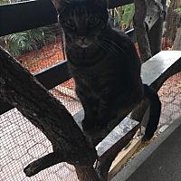 Adopt A Pet :: Toby - Lauderhill, FL