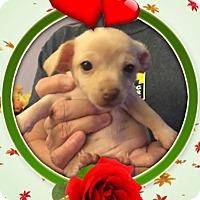 Adopt A Pet :: Ariel - Lodi, CA