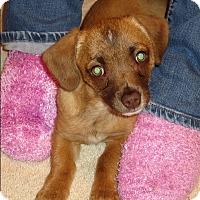 Adopt A Pet :: CHLOE *adoption pending!* - Nampa, ID