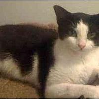 Adopt A Pet :: Amber - Tomball, TX