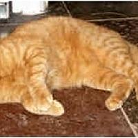 Adopt A Pet :: RED - Cranford, NJ