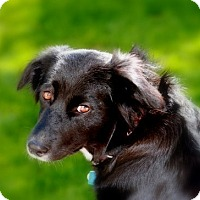 Adopt A Pet :: Easy ADOPTED - Ontario, ON
