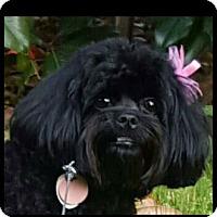 Adopt A Pet :: Iris - Alpharetta, GA