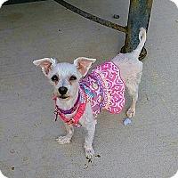 Adopt A Pet :: Mitzy - Las Vegas, NV