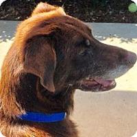 Adopt A Pet :: Dorothy - San Francisco, CA