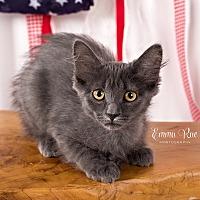 Adopt A Pet :: Carly - Mt. Clemens, MI
