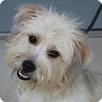 Adopt A Pet :: Benji (TIA) - Hagerstown, MD