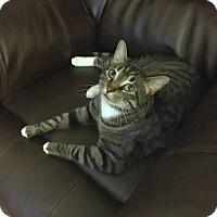 Adopt A Pet :: YodaCP - Carlisle, PA
