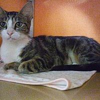 Adopt A Pet :: Healy - Elyria, OH
