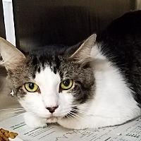 Adopt A Pet :: BENJAMAN - Ocala, FL