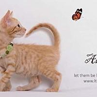 Adopt A Pet :: Archie - San Jacinto, CA