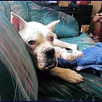 Adopt A Pet :: ROONEY - Boise, ID